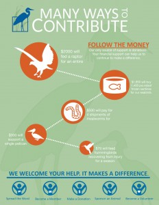 Wildlife-infographic