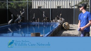 wildlife care network pp image